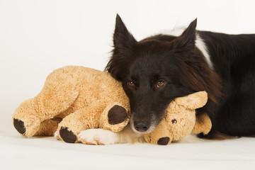 Hund mit Stofftier