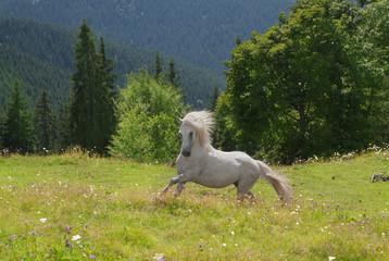 white horse run in green grass