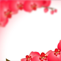 orchid background on white