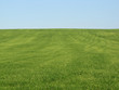 canvas print picture - green field wheat gras nature landscape agriculture