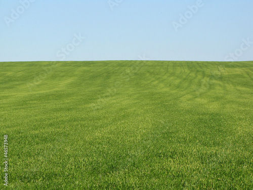 canvas print picture green field wheat gras nature landscape agriculture
