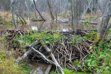 Beaver Dam on river