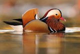 Fototapete Kleegras - Vögel - Vögel