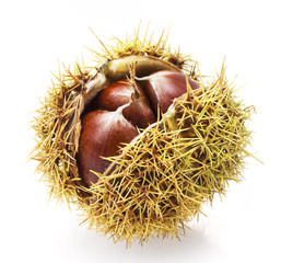 Parede class chestnuts, El Bierzo (Spain) isolated on white