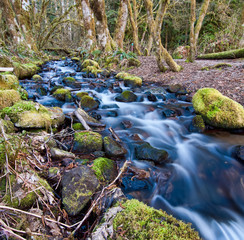 Flowing Stream With Mossy Rocks