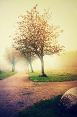 Fog in a park2