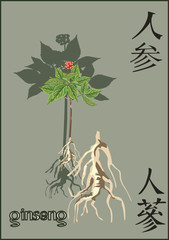 ginseng on dark background