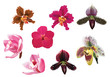 eight isolated orchid flowers on white