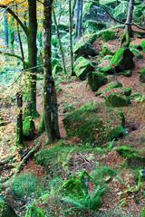 bosco con muschio