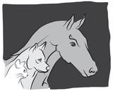 Fototapete Pferd - Schaf - Haustiere