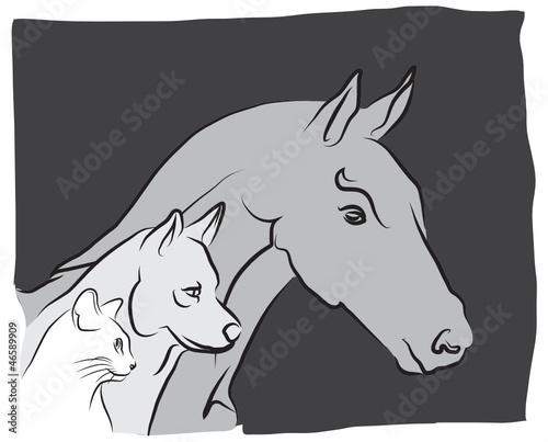 vétérinaire pour chien, chat et cheval