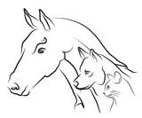 Fototapeta koń - owca - Zwierzę domowe