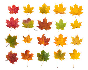collection beautiful autumn leaves
