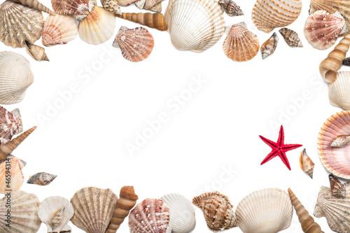 Sea shells frame on white background - 46594314