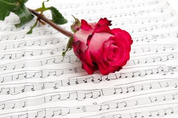 Rose auf Notenblatt