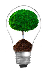 Concept. ecological lamp with green tree