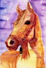watercolour portrait of the horse.