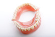 medical denture  jaws teeth on white background
