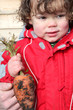 Little boy holding a carrot in kitchen garden