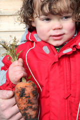 Little boy holding a carrot in kitchen garden