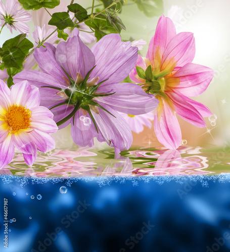 Fototapeten,natur,wasser,orchidee,dahlia