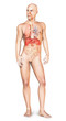 Male naked body standing, with full respiratory system superimpo