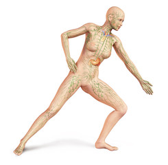 Female naked body, with full Lymphatic system superimposed. Anat