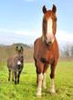 âne et cheval dans un pré