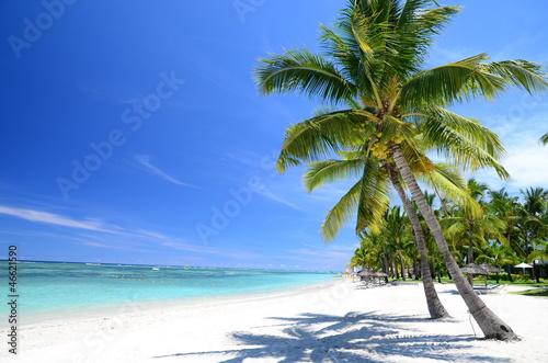 Fototapeten,mauritius,strand,palme,sand