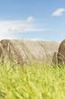 Silage bales in summer landscape