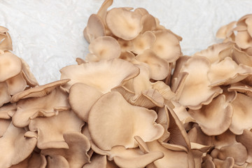 Industrial growth of oyster mushrooms