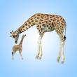 Obrazy drukowane na płótnie, fototapety, zdjęcia, fotoobrazy cyfrowe : Giraffe And Young One