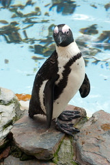 zoo penguin