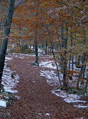 path of fallen leaves in autumn