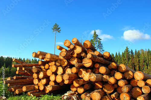 Logs in the logging