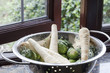 Colander of Parsnips