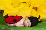 Newborn Baby Girl Wearing a Ladybug Costume