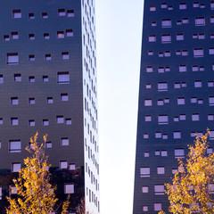 2 trees vs. 2 buildings