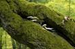 Leśne Jesienne Grzybt