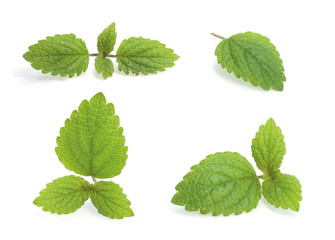 Various Lemon balm