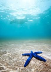Blue starfish deep underwater