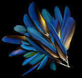 plumas de guacamayo