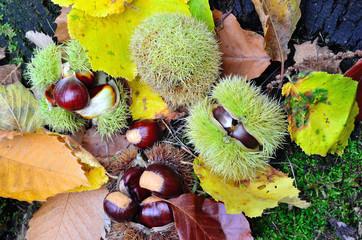 castagne e autunno