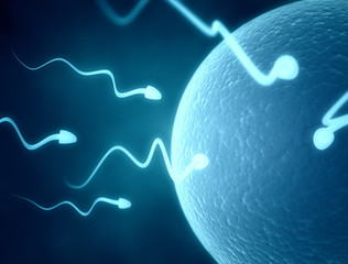 Sperm cells and human egg cell