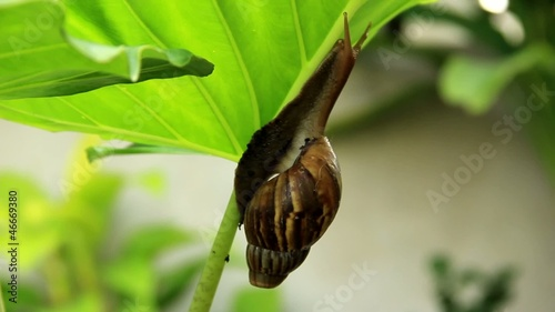 Snail climb trees Part2