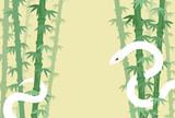 白ヘビと竹林 - 46674148