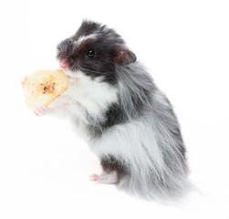 Hamster mit einem Bananenstück