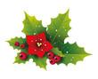 Ilex Zweige u. Berren mit Weihnachtsstern