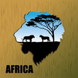 African lions background