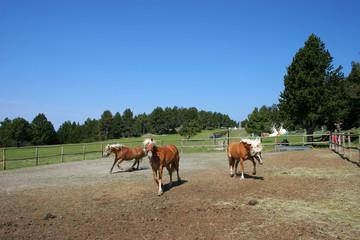 caballo 03